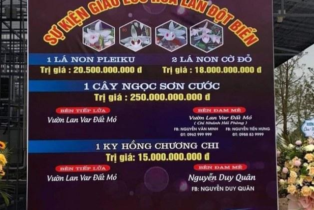 Thương vụ lan var 250 tỷ đồng: Cục Thuế Quảng Ninh nói chờ công an vào cuộc
