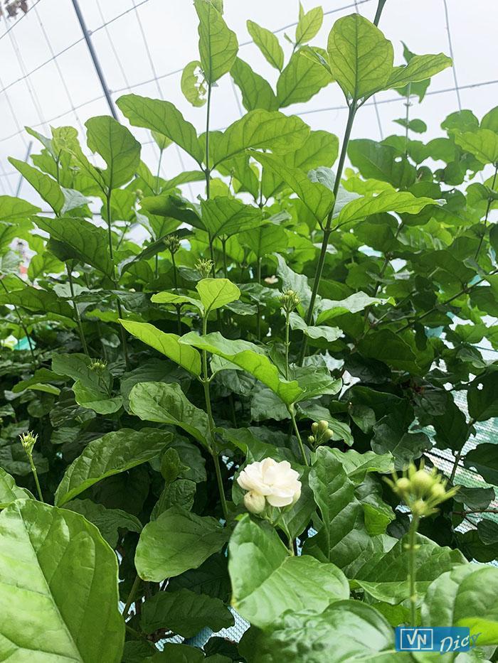 Các con có thể ngửi thấy mùi thơm của hoa, mùi của đất khi có cơn mưa xuống...