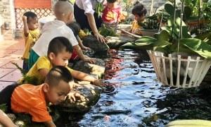 Có một nông trại xanh ngay trong ngôi Trường Mầm Non giữa lòng TP Thuận An